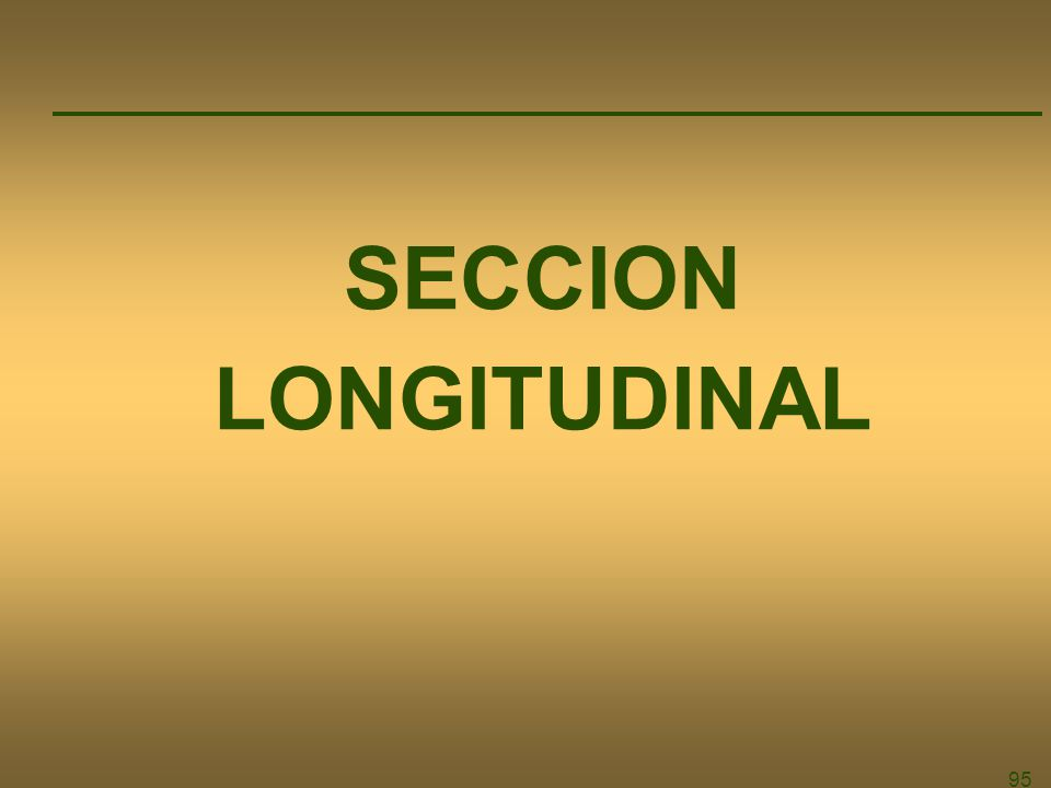 SECCION LONGITUDINAL 95