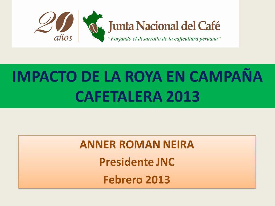 IMPACTO DE LA ROYA EN CAMPAÑA CAFETALERA 2013