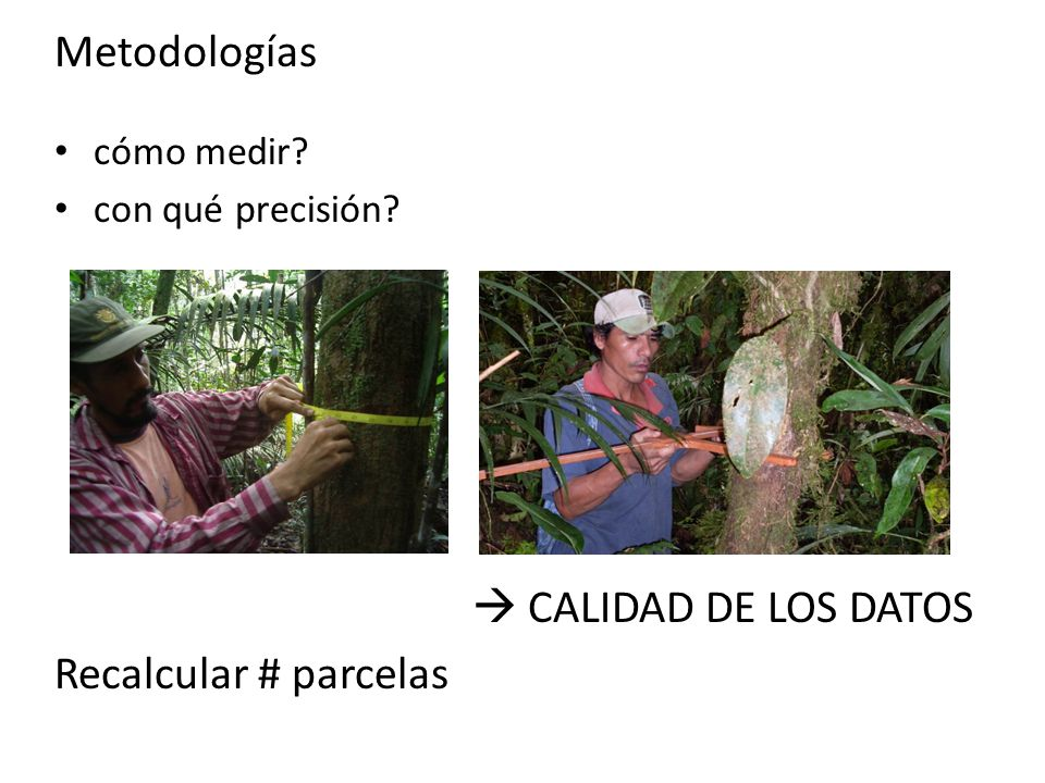 Metodologías  CALIDAD DE LOS DATOS Recalcular # parcelas cómo medir