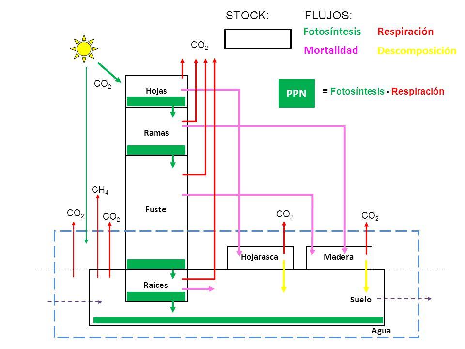 Producción de metano (CH4):
