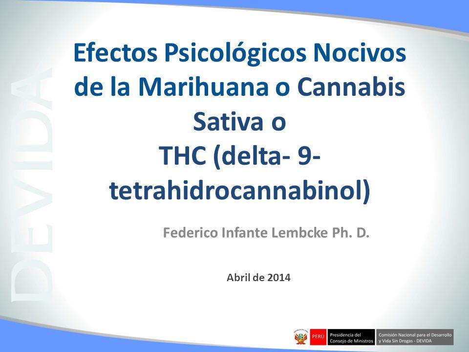 Federico Infante Lembcke Ph. D.