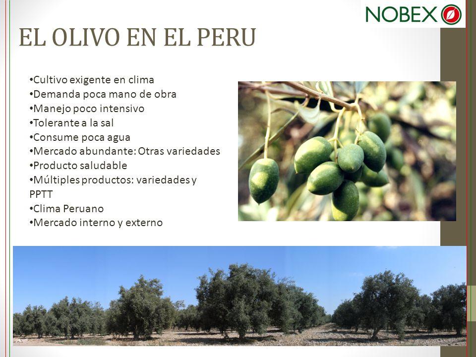 EL OLIVO EN EL PERU Cultivo exigente en clima