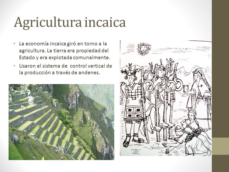 Agricultura incaica La economía incaica giró en torno a la agricultura. La tierra era propiedad del Estado y era explotada comunalmente.