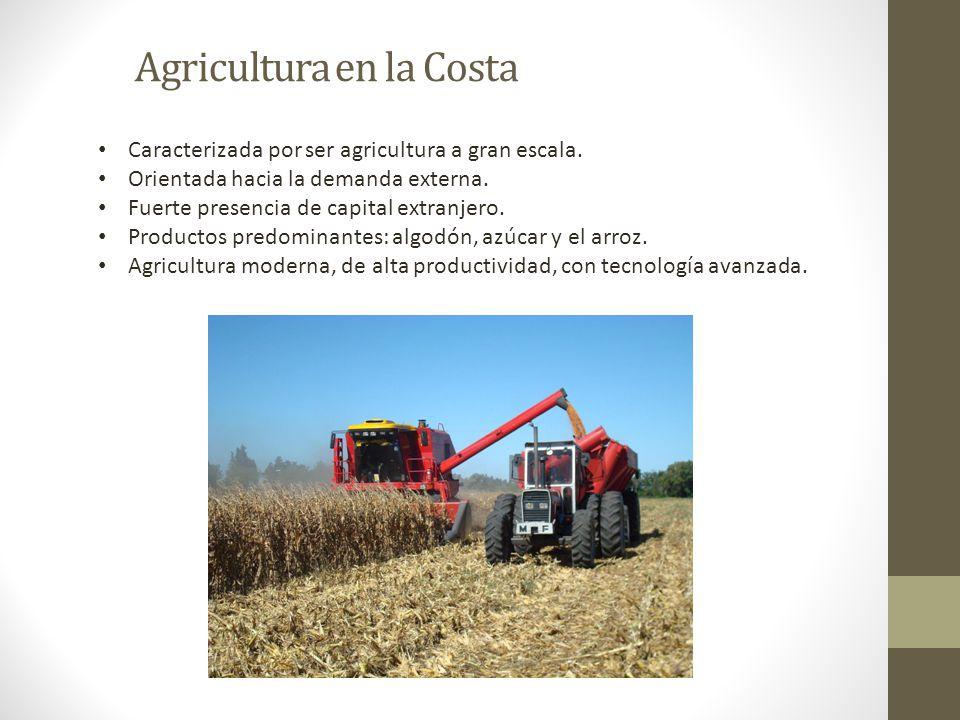 Agricultura en la Costa