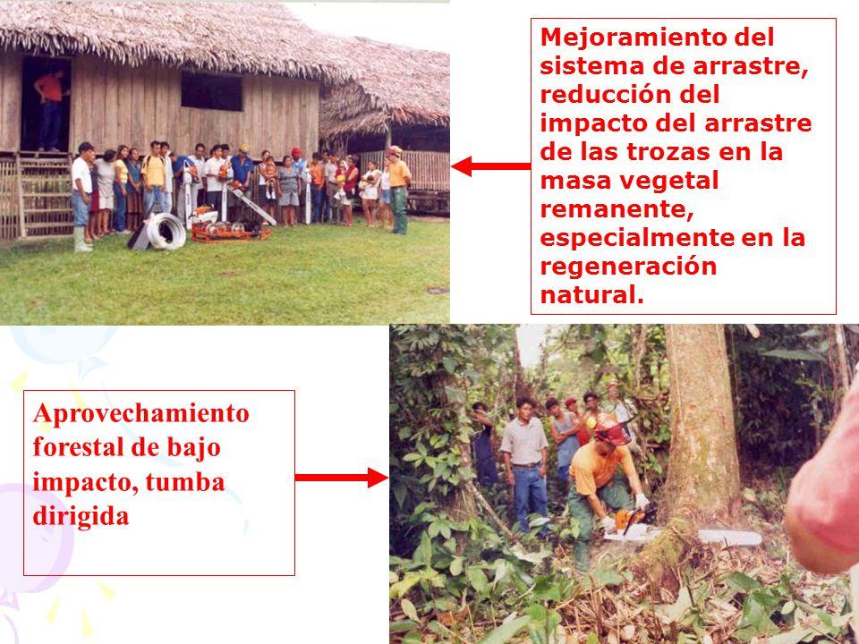 Aprovechamiento forestal de bajo impacto, tumba dirigida