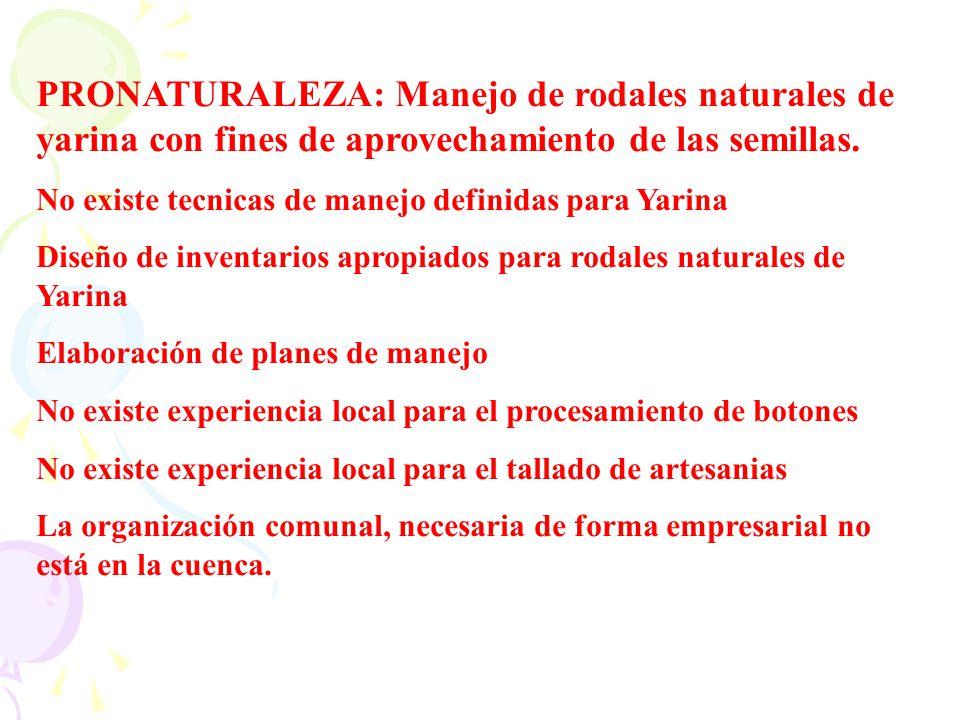 PRONATURALEZA: Manejo de rodales naturales de yarina con fines de aprovechamiento de las semillas.