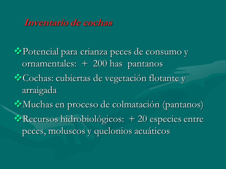 Inventario de cochas Potencial para crianza peces de consumo y ornamentales: + 200 has pantanos.