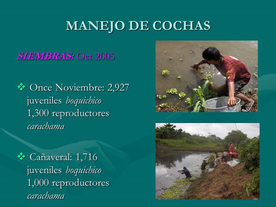 MANEJO DE COCHAS SIEMBRAS: Oct 2005