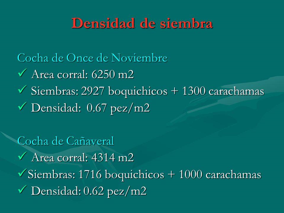 Densidad de siembra Cocha de Once de Noviembre Area corral: 6250 m2