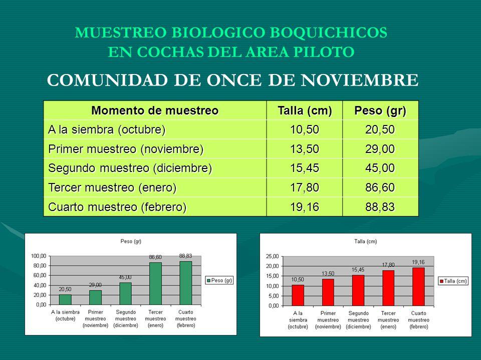 MUESTREO BIOLOGICO BOQUICHICOS EN COCHAS DEL AREA PILOTO