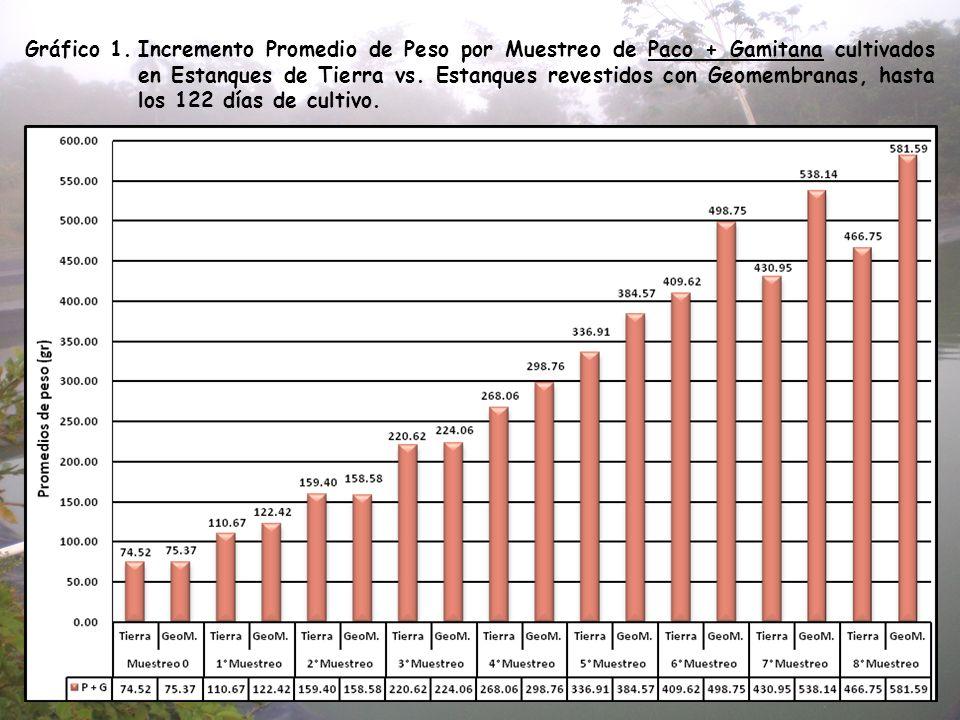 Gráfico 1. Incremento Promedio de Peso por Muestreo de Paco + Gamitana cultivados en Estanques de Tierra vs.