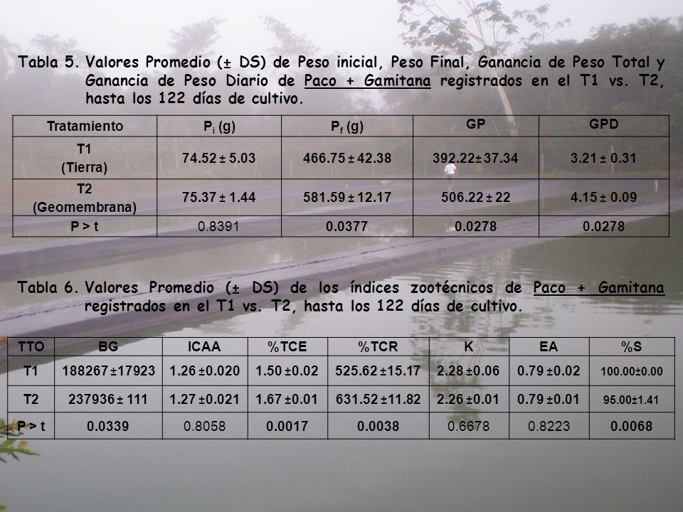 Tabla 5. Valores Promedio (± DS) de Peso inicial, Peso Final, Ganancia de Peso Total y Ganancia de Peso Diario de Paco + Gamitana registrados en el T1 vs. T2, hasta los 122 días de cultivo.