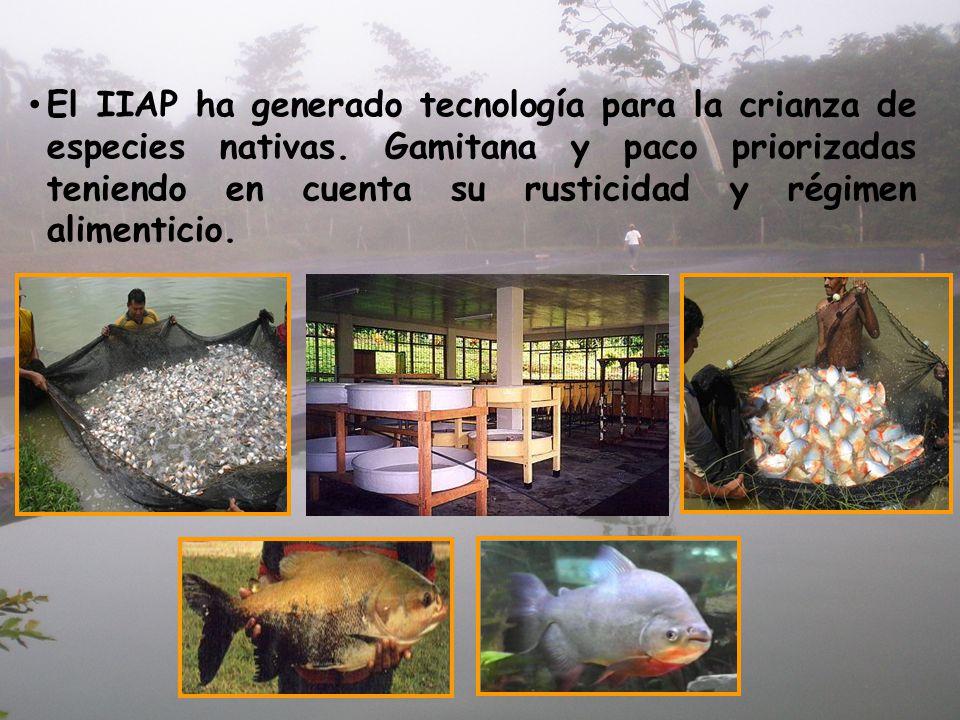 El IIAP ha generado tecnología para la crianza de especies nativas