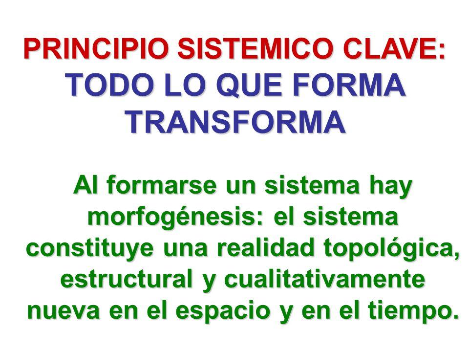 PRINCIPIO SISTEMICO CLAVE: TODO LO QUE FORMA TRANSFORMA