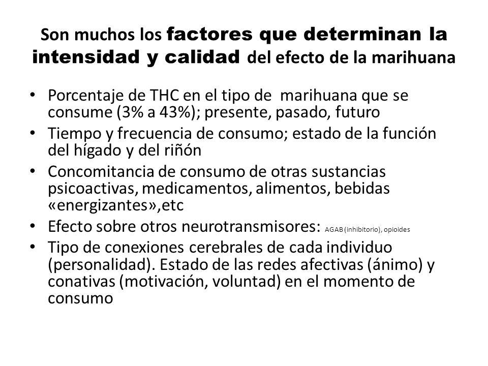 Son muchos los factores que determinan la intensidad y calidad del efecto de la marihuana