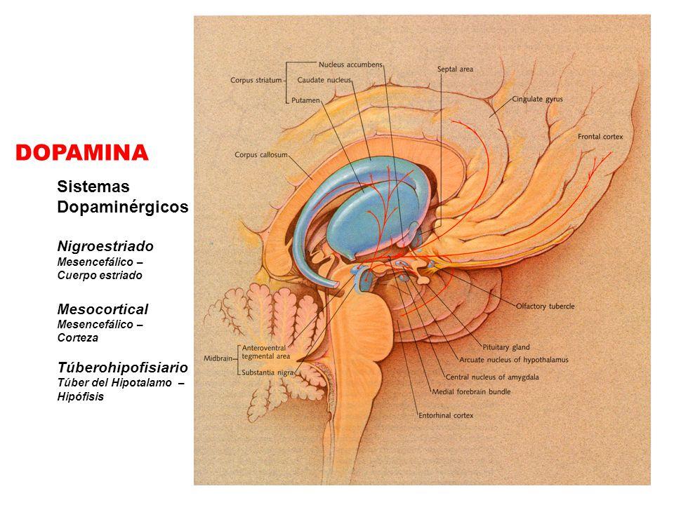 DOPAMINA Sistemas Dopaminérgicos Nigroestriado Mesocortical
