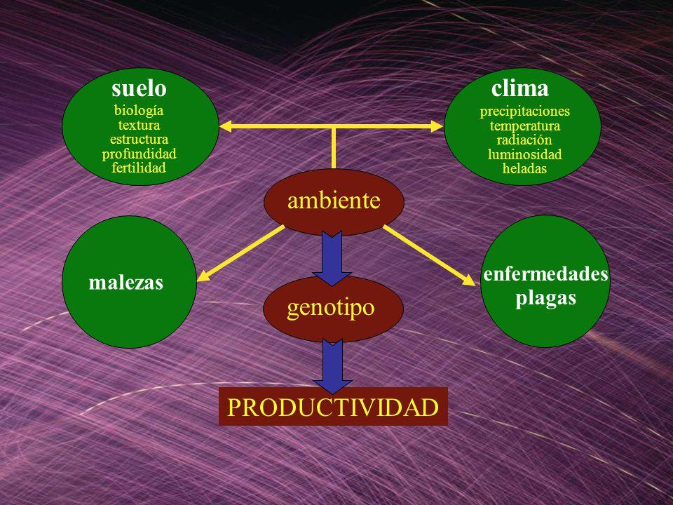 suelo clima ambiente genotipo PRODUCTIVIDAD malezas plagas