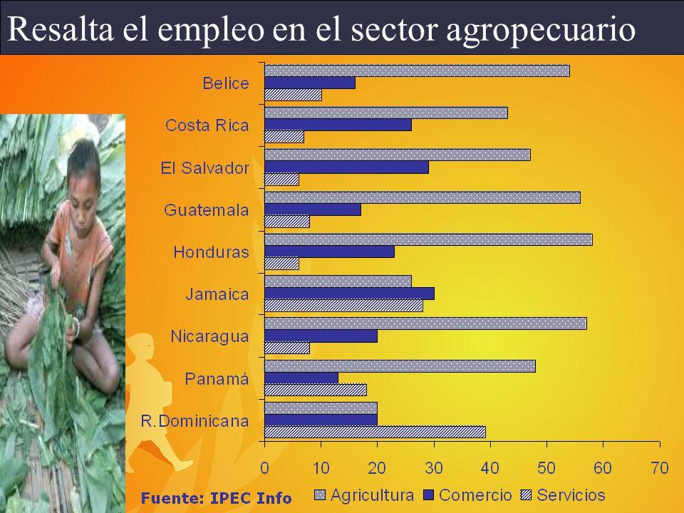 Resalta el empleo en el sector agropecuario