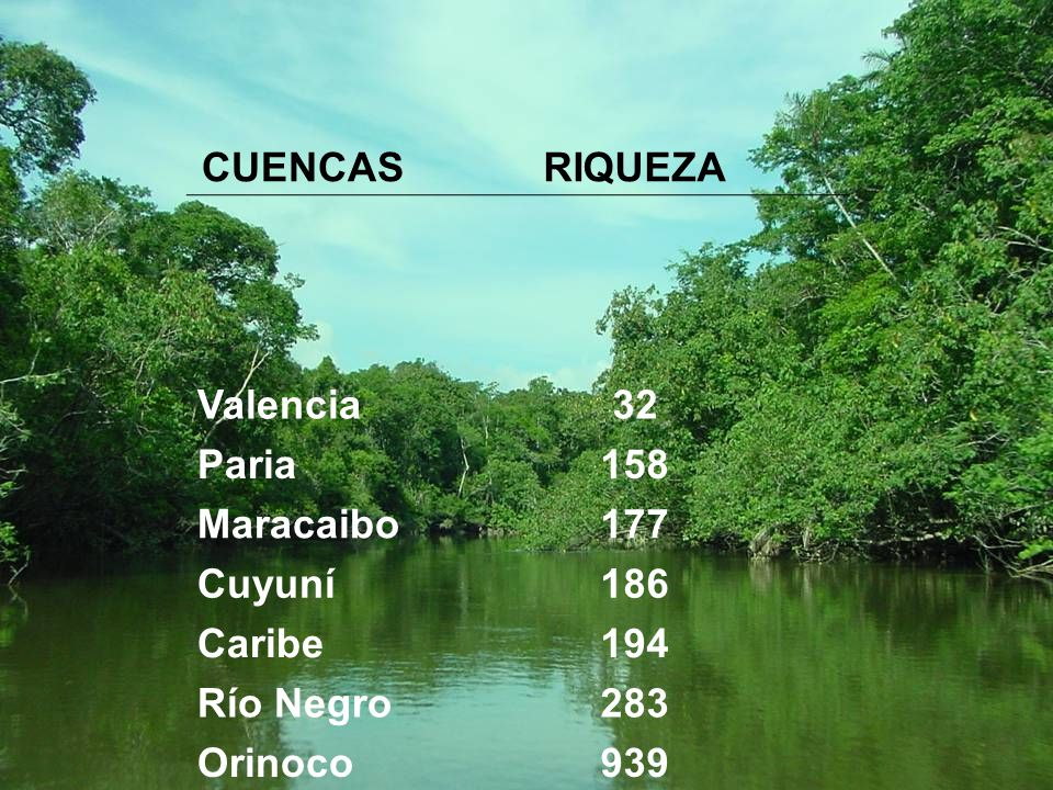 CUENCAS RIQUEZA Valencia 32 Paria 158 Maracaibo 177 Cuyuní 186 Caribe 194 Río Negro 283 Orinoco 939