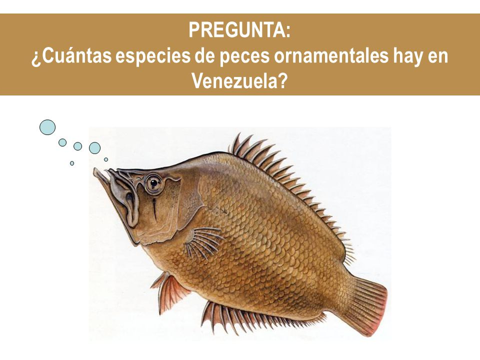¿Cuántas especies de peces ornamentales hay en Venezuela