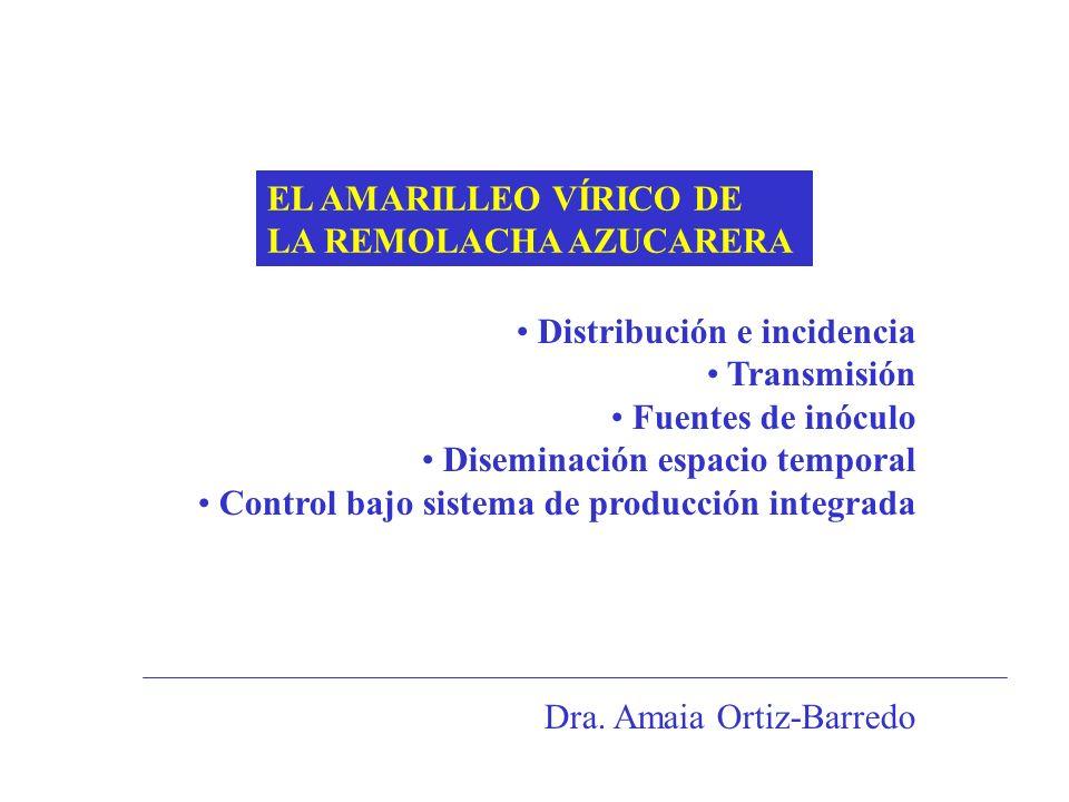 EL AMARILLEO VÍRICO DE LA REMOLACHA AZUCARERA. Distribución e incidencia. Transmisión. Fuentes de inóculo.