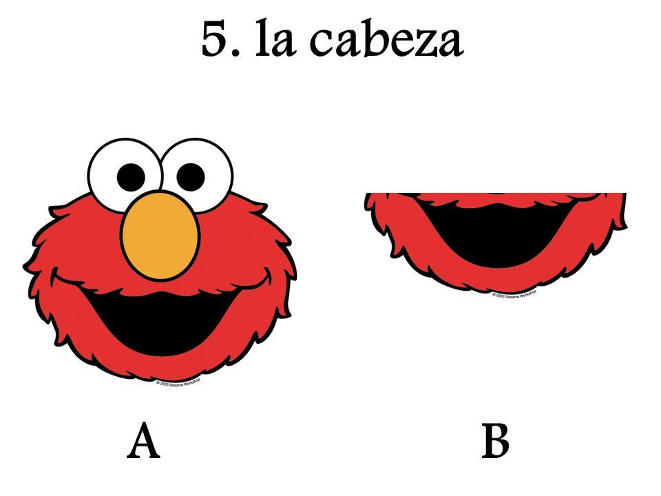 5. la cabeza A B