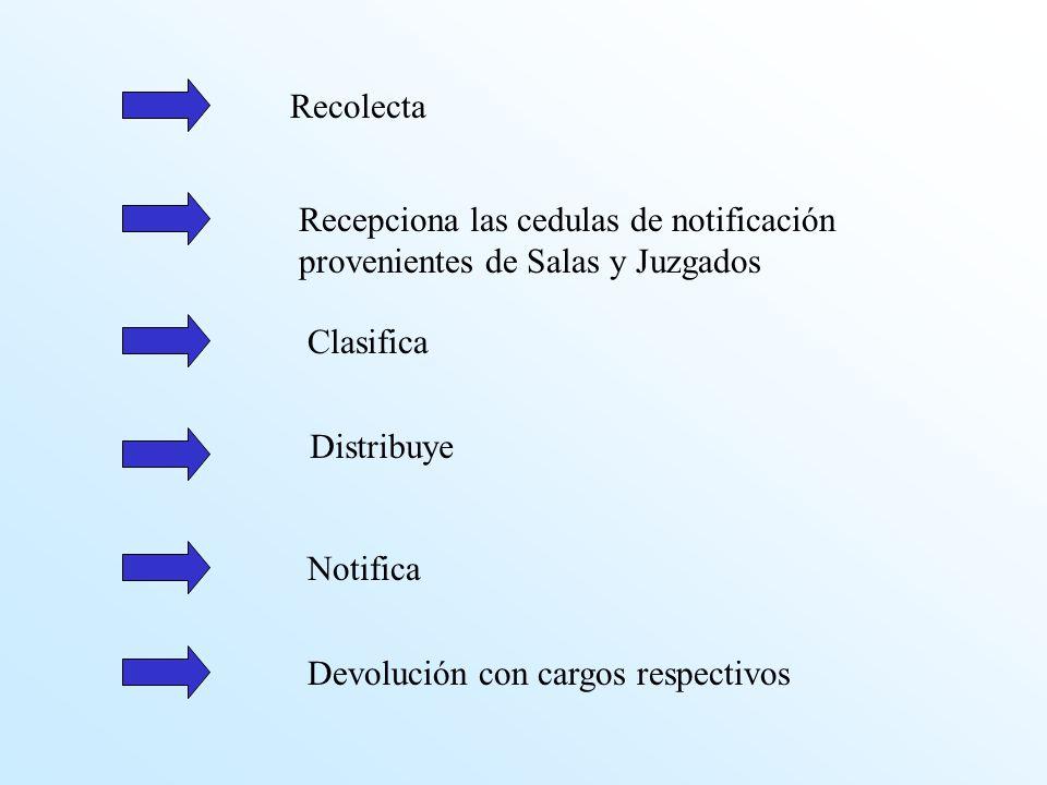 Recolecta Recepciona las cedulas de notificación provenientes de Salas y Juzgados. Clasifica. Distribuye.