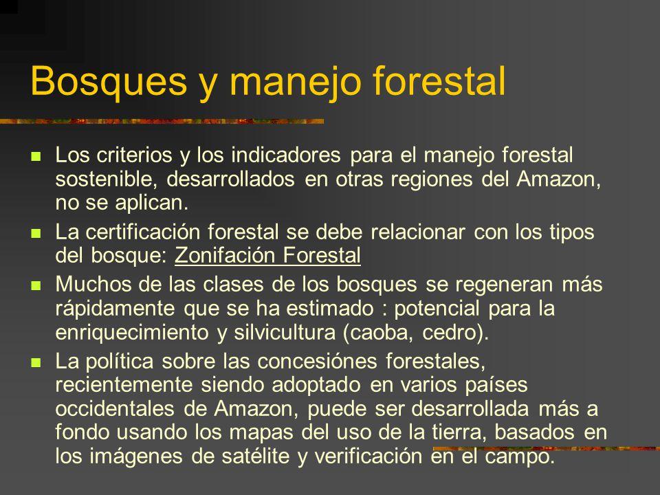 Bosques y manejo forestal