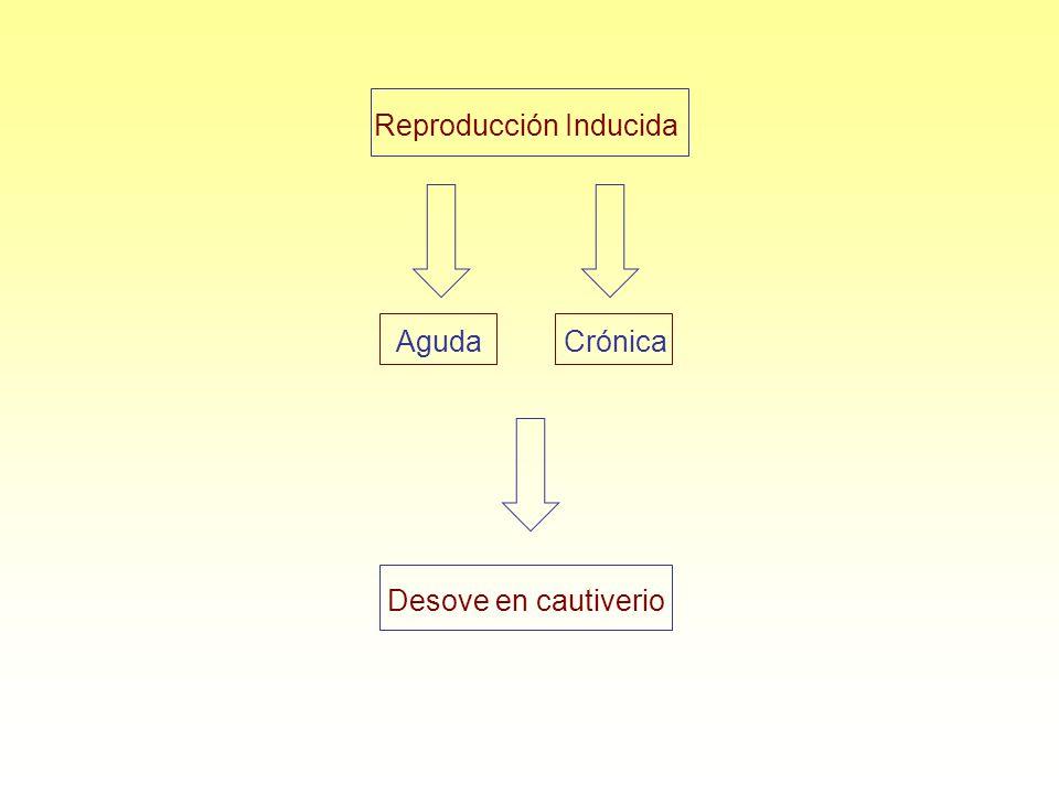Reproducción Inducida