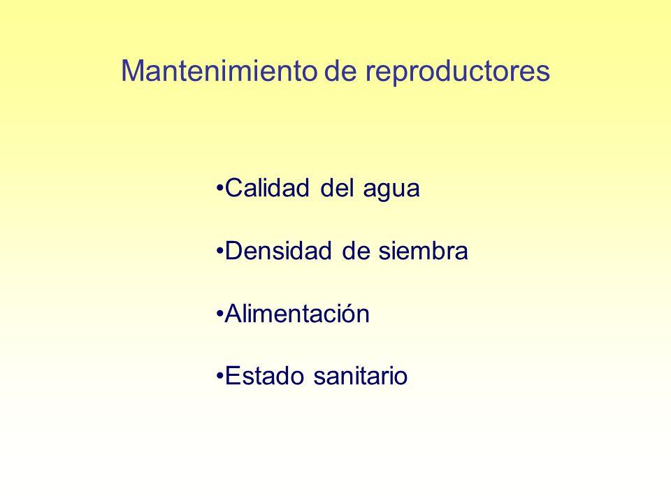 Mantenimiento de reproductores