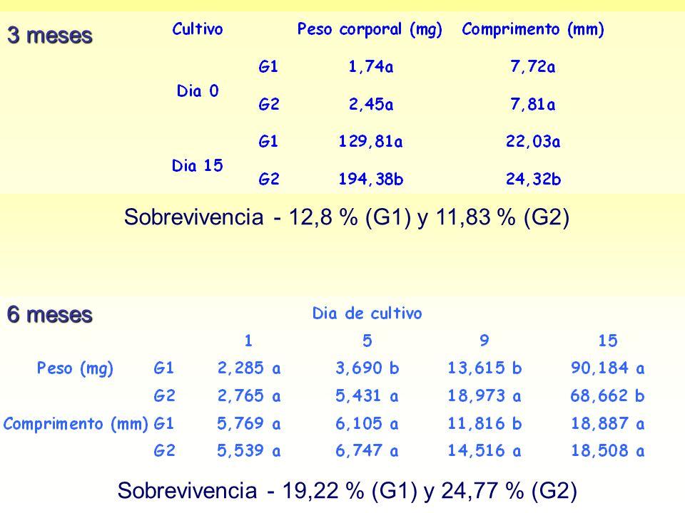 Sobrevivencia - 12,8 % (G1) y 11,83 % (G2)