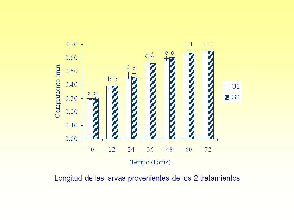 Longitud de las larvas provenientes de los 2 tratamientos