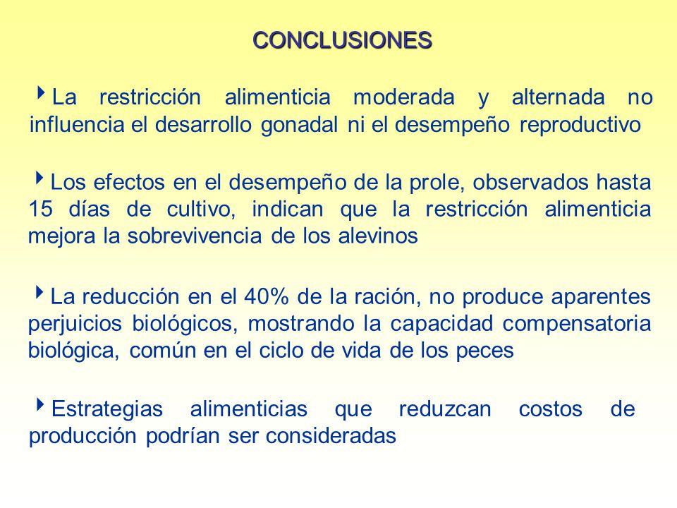 CONCLUSIONES La restricción alimenticia moderada y alternada no influencia el desarrollo gonadal ni el desempeño reproductivo.