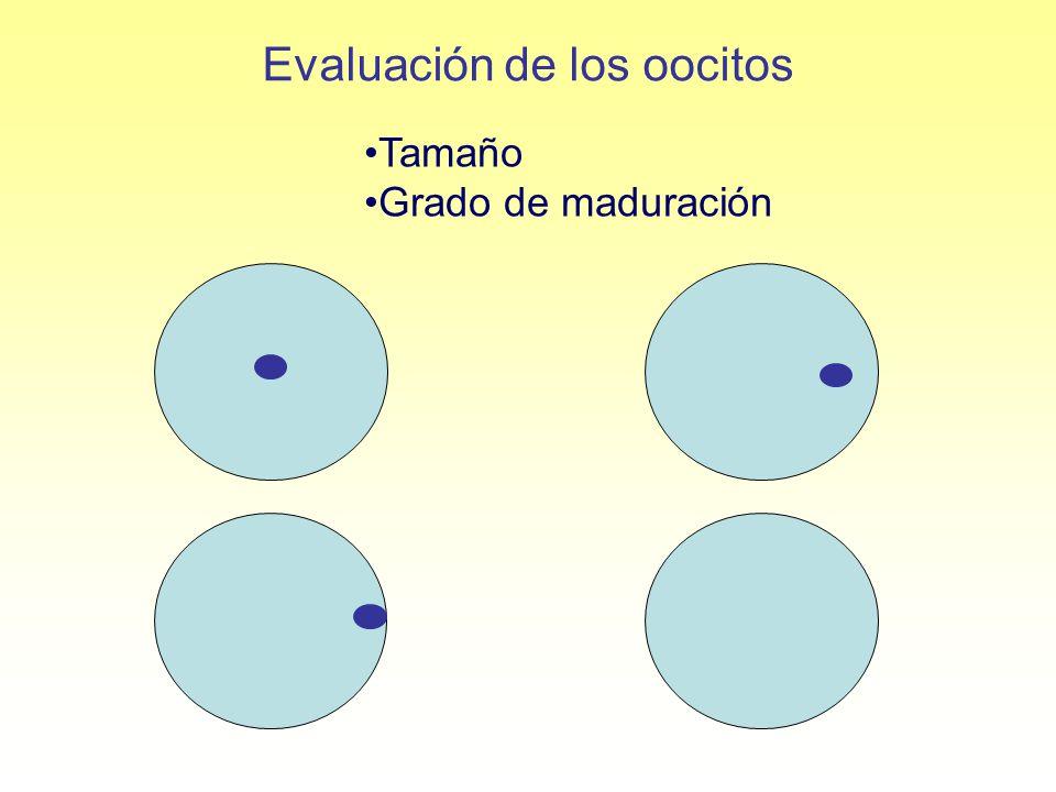 Evaluación de los oocitos