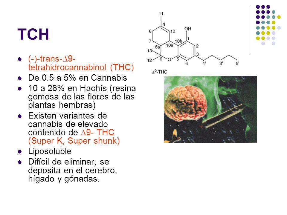 TCH (-)-trans-∆9-tetrahidrocannabinol (THC) De 0.5 a 5% en Cannabis