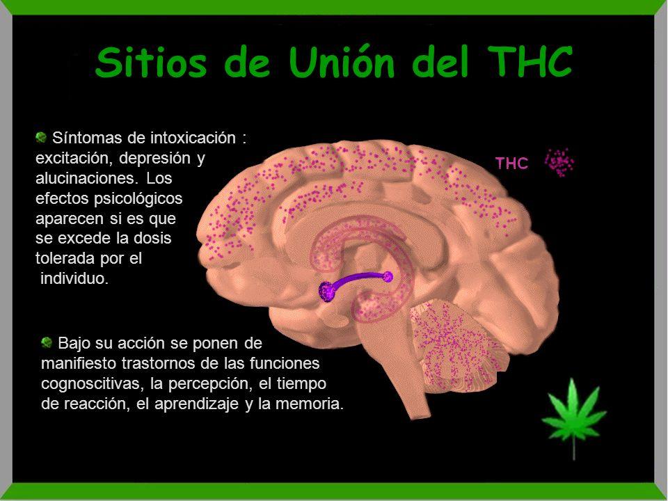 Sitios de Unión del THC Síntomas de intoxicación : excitación, depresión y alucinaciones. Los. efectos psicológicos.