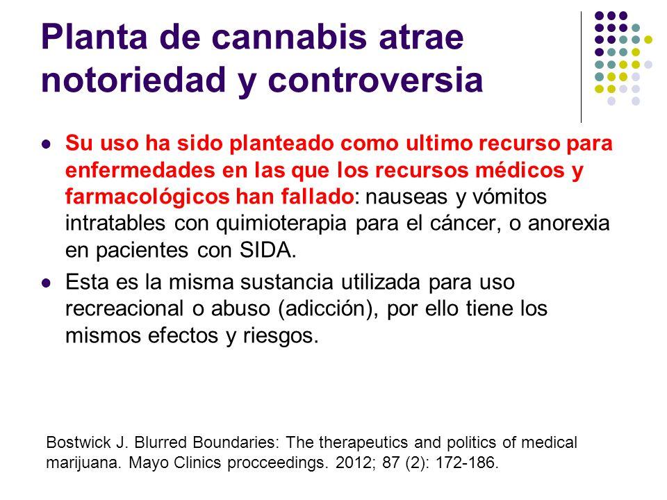 Planta de cannabis atrae notoriedad y controversia