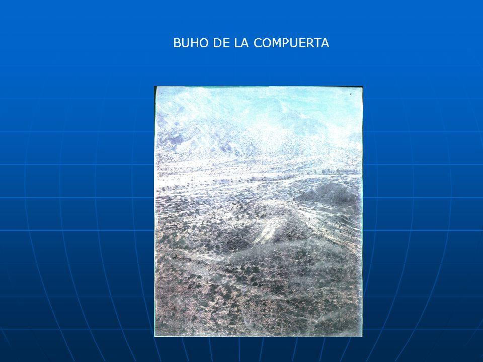 BUHO DE LA COMPUERTA