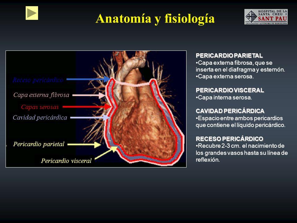 Anatomía y fisiología Receso pericárdico Capa externa fibrosa