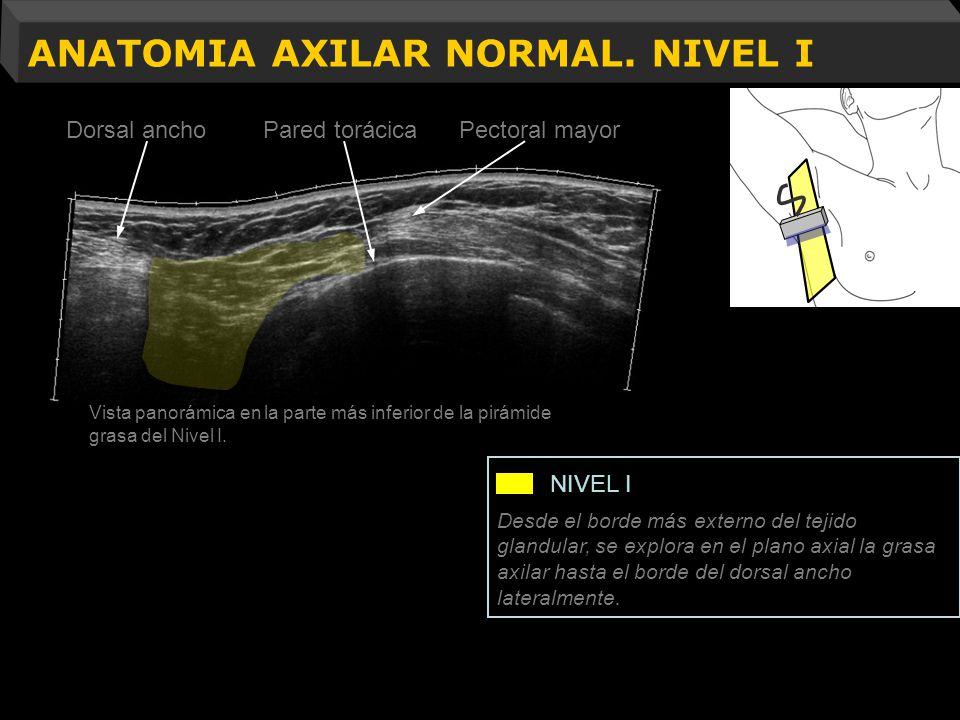 ANATOMIA AXILAR NORMAL. NIVEL I