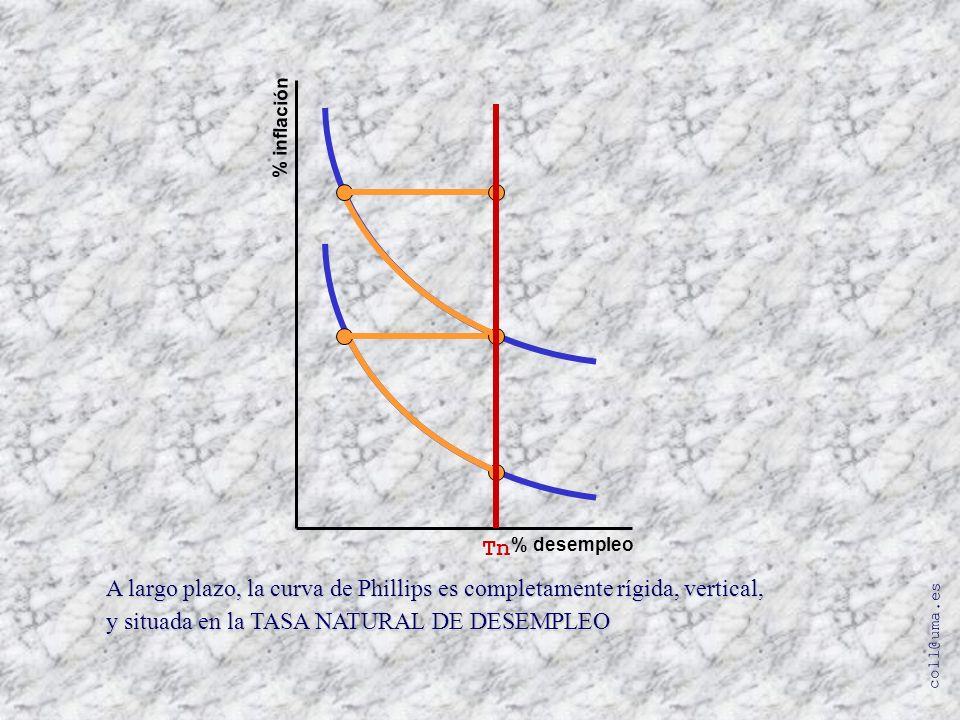 A largo plazo, la curva de Phillips es completamente rígida, vertical,
