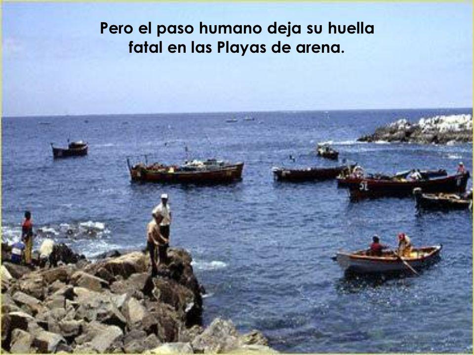 Pero el paso humano deja su huella fatal en las Playas de arena.