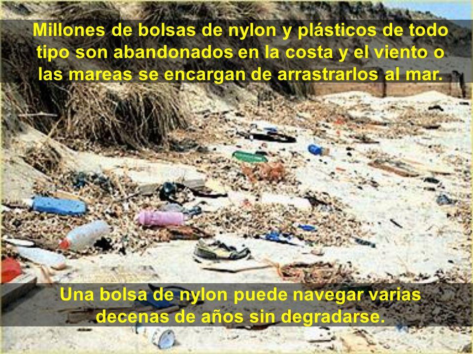Millones de bolsas de nylon y plásticos de todo tipo son abandonados en la costa y el viento o las mareas se encargan de arrastrarlos al mar.