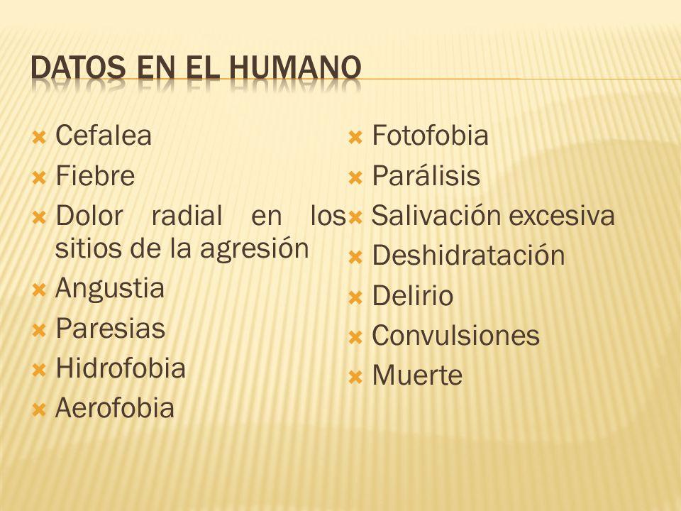 Datos en el humano Cefalea Fotofobia Fiebre Parálisis