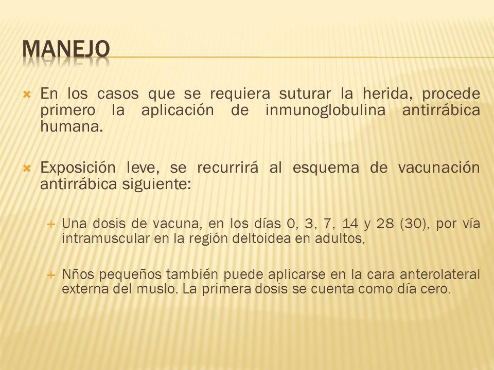 manejo En los casos que se requiera suturar la herida, procede primero la aplicación de inmunoglobulina antirrábica humana.