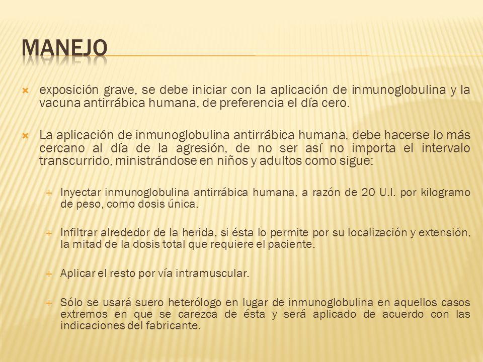 manejo exposición grave, se debe iniciar con la aplicación de inmunoglobulina y la vacuna antirrábica humana, de preferencia el día cero.