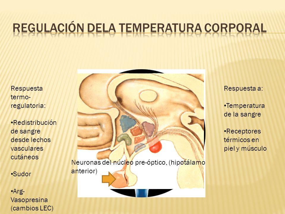 Regulación dela temperatura corporal