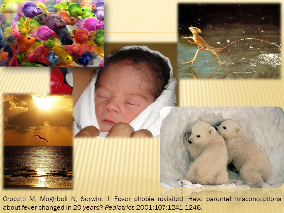Crocetti M, Moghbeli N, Serwint J: Fever phobia revisited: Have parental misconceptions about fever changed in 20 years Pediatrics 2001;107:1241-1246.
