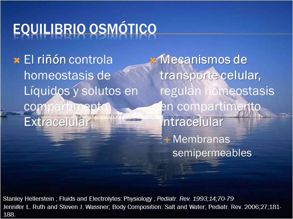 Equilibrio osmótico El riñón controla homeostasis de Líquidos y solutos en compartimento Extracelular.
