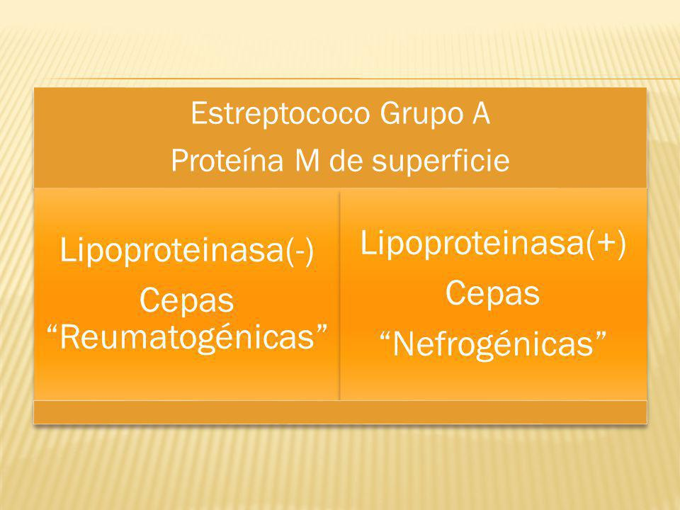 Cepas Reumatogénicas Lipoproteinasa(+) Cepas Nefrogénicas